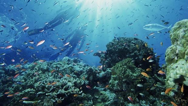 Islas Desventuradas: Chile
