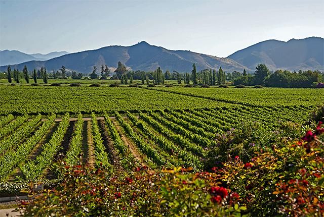 Odfjell se consolida como la viña orgánica de calidad premium de Chile